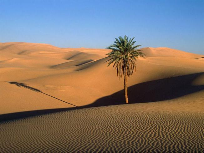 Hoang mạc cát