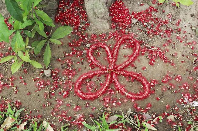 Nhặt cánh hoa, ghép thành những hoài niệm