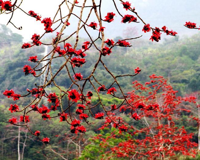 Sắc hoa đỏ rực một góc trời