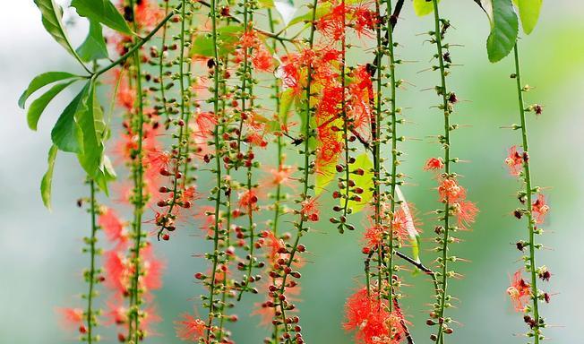Ở đâu đó, có những loài hoa mang tên gọi tháng 4
