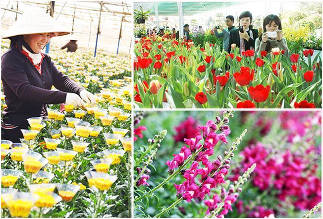 Làng hoa Thái Phiên làm say đắm lòng người