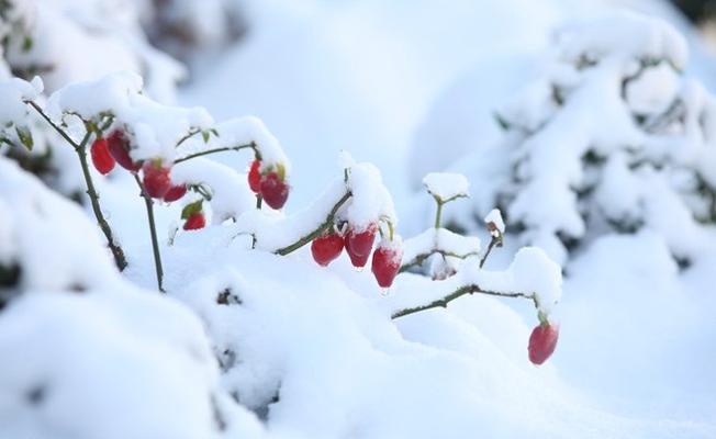 Tuyết bao bọc lấy cảnh vật của Sa Pa