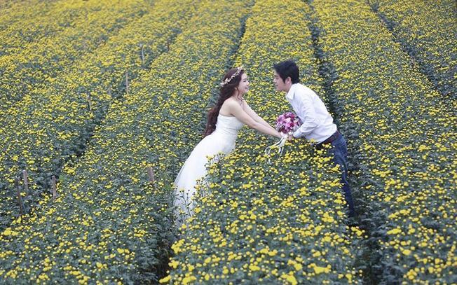 Chụp ảnh cưới tại làng hoa Thái Phiên