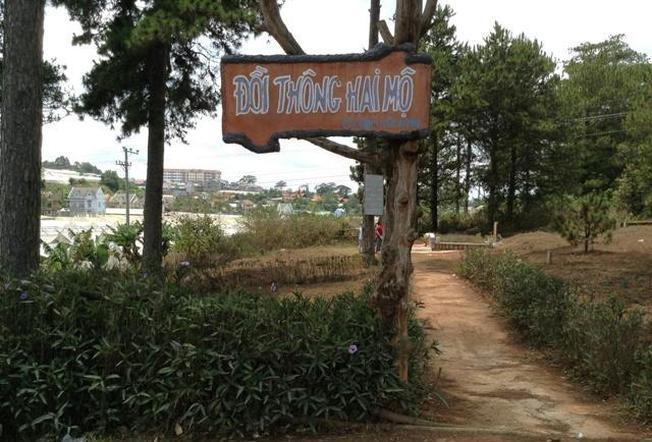 Đồi thông hai mộ địa điểm du lịch Đà Lạt nổi tiếng