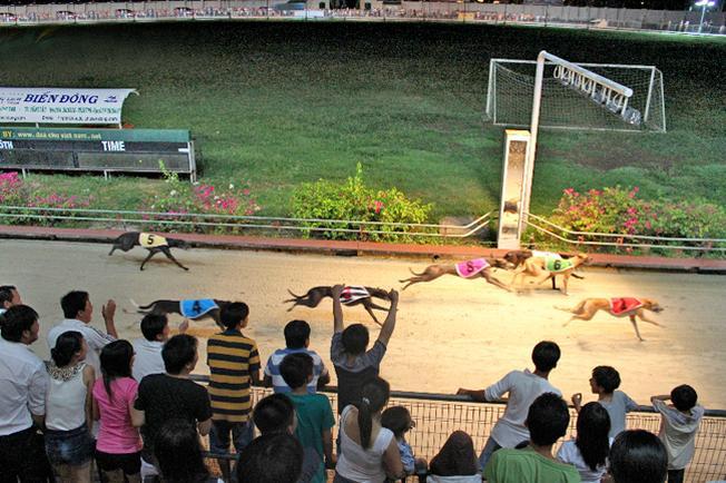 Xem đua chó – một trải nghiệm thú vị chỉ có tại Vũng Tàu