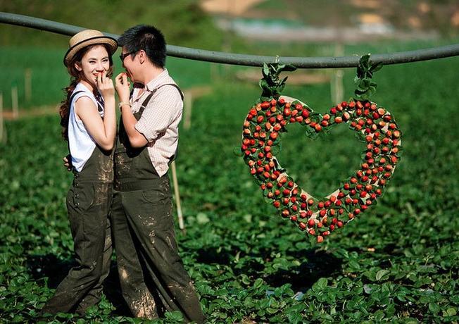 Vườn dâu cũng là một địa điểm tham quan Đà Lạt có thể mang lại nét độc đáo cho bộ ảnh cưới của bạn