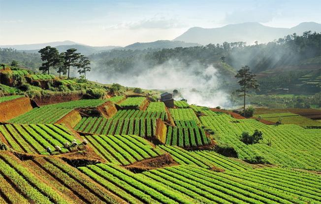 Bạt ngàn với những đồi rau bậc thang một cảnh đẹp Đà Lạt