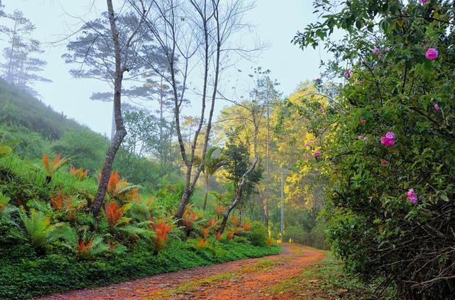 Ma rừng lữ quán là một trong ít những địa điểm đẹp ở Đà Lạt làm hài lòng phượt thủ