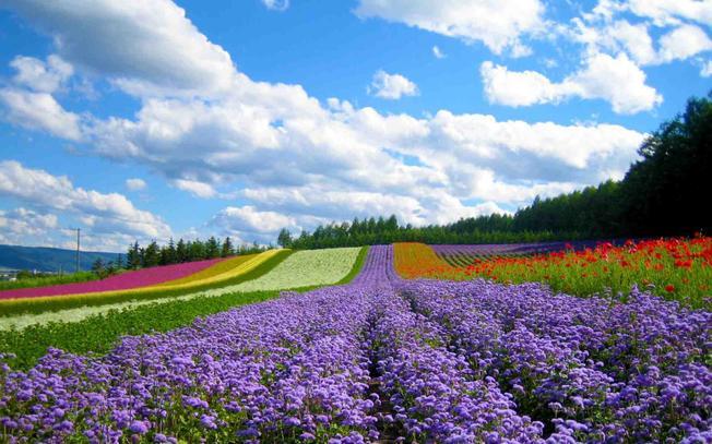 Hoa Đà Lạt với muôn sắc màu