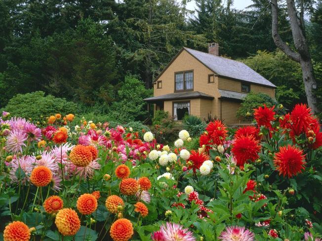 Khách xao lòng với không khí ngập tràn sắc hoa