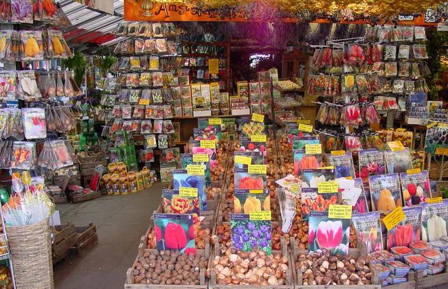 Nên tìm mua hạt giống tại những cửa hàng hoa tin cậy