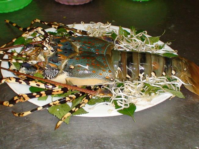 Tôm rồng – nguyên liệu để làm nên món tiết canh lừng danh Long Hải
