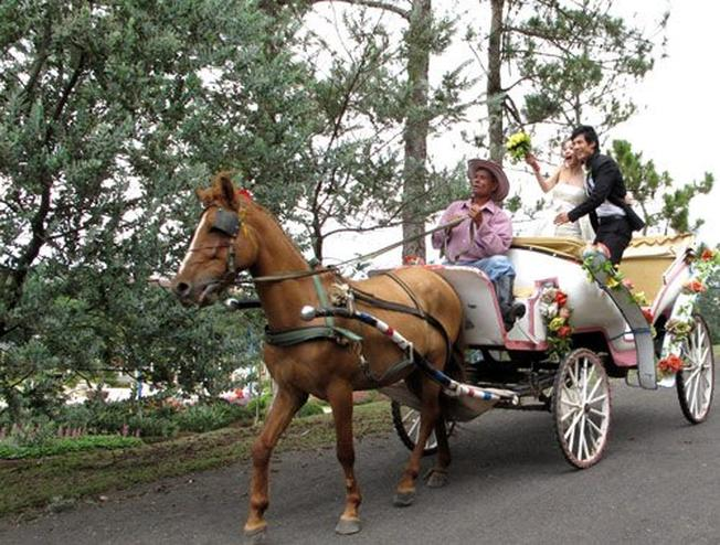 Các cặp đôi cũng rất hứng thú với loại hìn dịch vụ đi xe ngựa chụp ảnh
