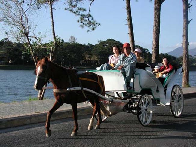 Đi xe ngựa dạo quanh Hồ Xuân Hương một thú vui tao nhã khi đi du lịch Đà Lạt