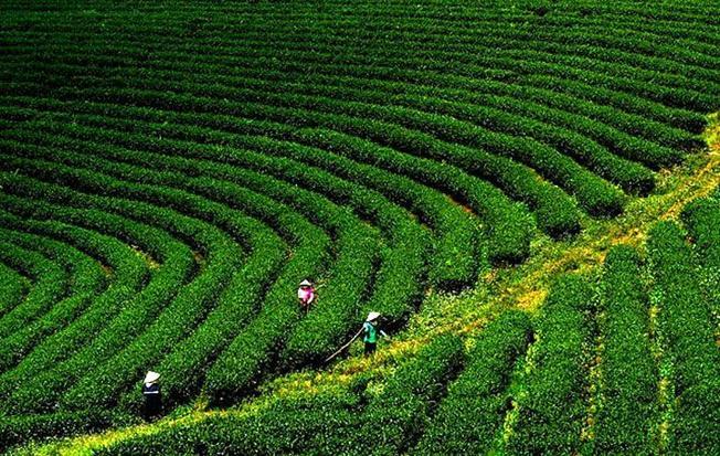 Phượt Đà Lạt đến Kinh đô trà hương