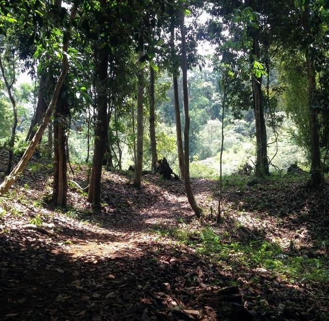 Lối mòn tiến vào rừng nguyên sinh