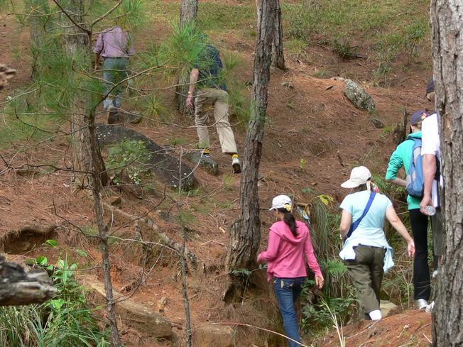 Leo lên đỉnh Lang Biang bạn phải qua một khu rừng già