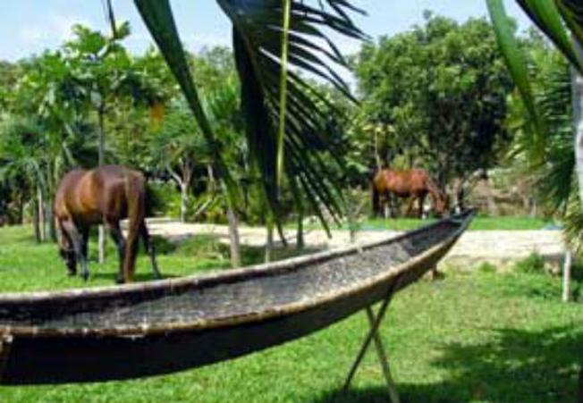 Không gian yên bình gợi nhớ làng quê Việt