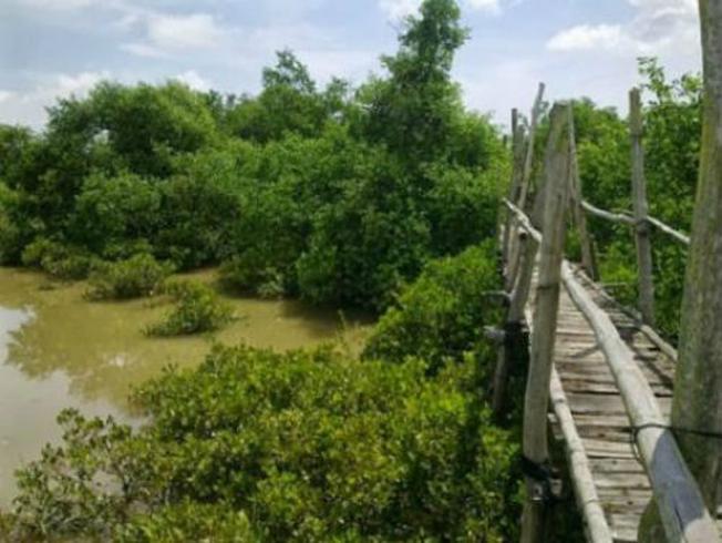 Chiếc cầu tre khiến khung cảnh làng quê hiện lên rõ nét tại địa điểm du lịch này