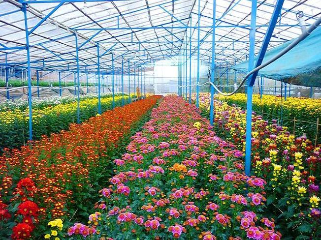 Miss Đà Lạt là sản phẩm từ nhiều loại hoa thiên nhiên