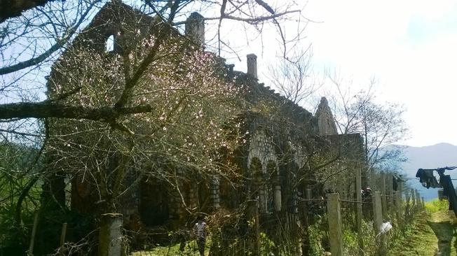 Mỗi độ Xuân về Tết đến, những chiếc hoa mận lại điểm tô thêm cho tu viện cổ một vẻ đẹp thuần khiết