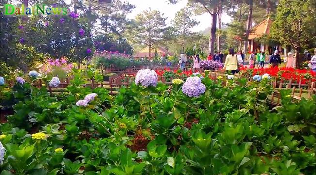 Vườn hoa Thiền viện Trúc Lâm