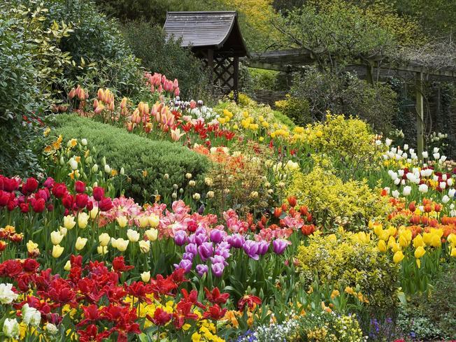 Muôn màu sắc hoa trong kỳ Festival hoa Đà Lạt