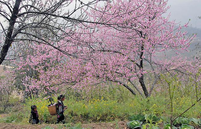 Mùa xuân khi trăm hoa đua nở chính là mùa của ong mật