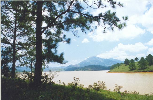 Hồ Suối Vàng – Dankia phơi mình bên đồi thông