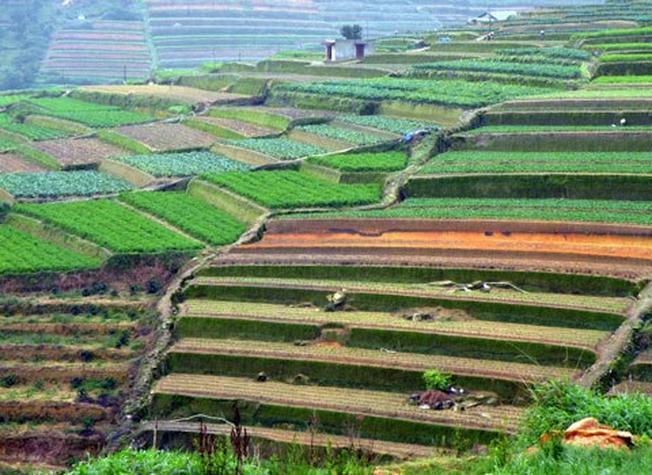 Những thửa ruộng bậc thang ở Đà Lạt ấn tượng