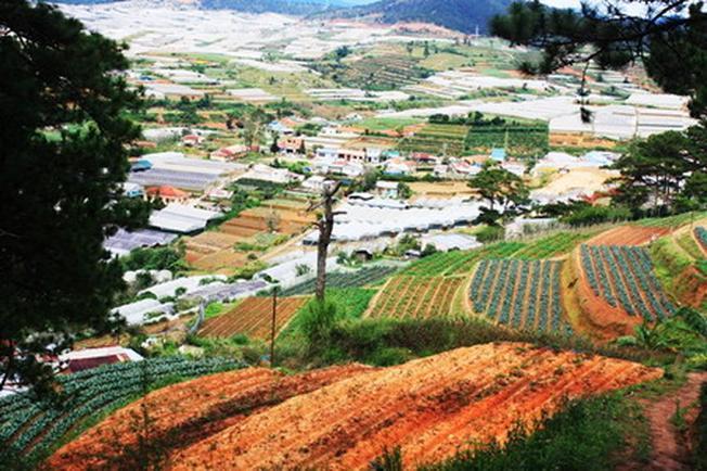 Thành phố Đà Lạt yên ả thơ mộng với những ruộng bậc thang