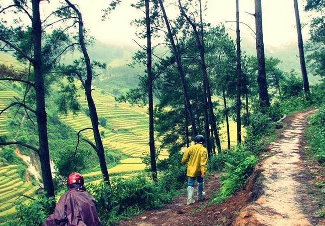 Những thửa ruộng bậc thang ven rừng thông