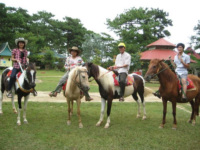 Xe ngựa Đà Lạt dành cho du khách thích cảm giác chinh phục