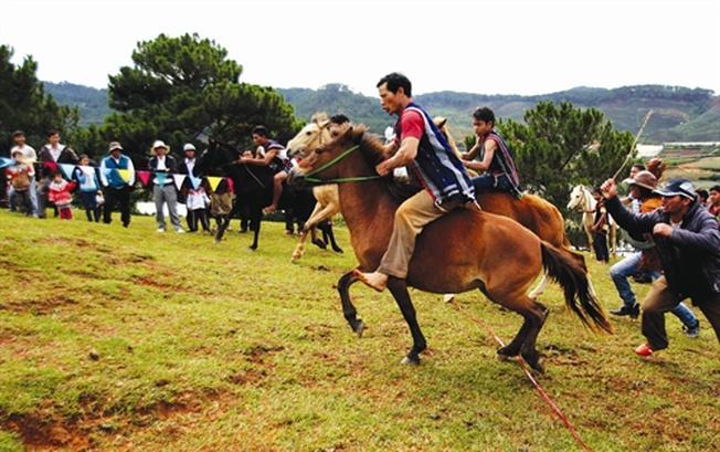 Cuộc đua ngựa không yên