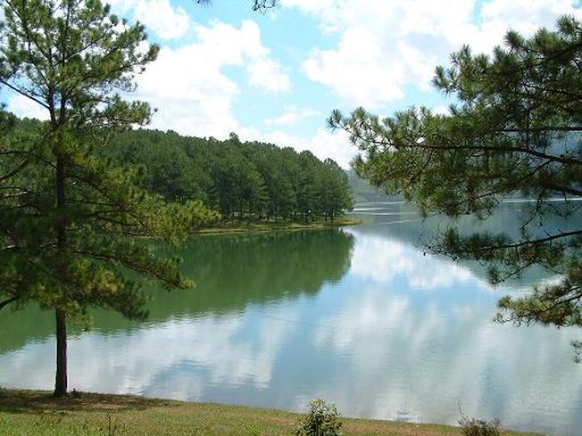 Rừng thông xanh mướt bao quanh hồ
