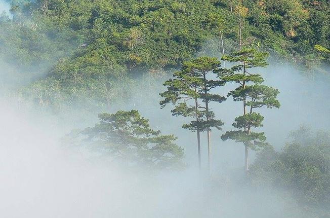 Đà Lạt lúc ẩn lúc hiện phía sau những rừng thông bạt ngàn