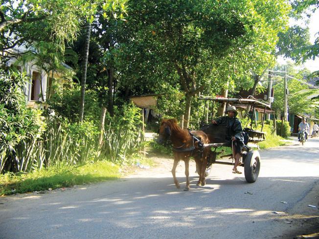 Chiếc xe ngựa tại Nha Trang