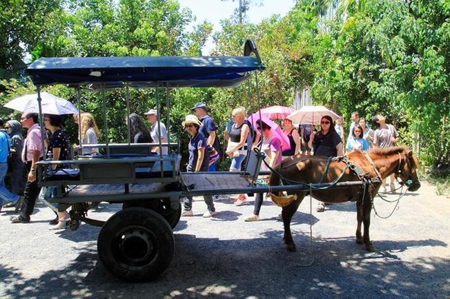Du lịch Nha Trang bằng xe ngựa là loại hình được nhiều người yêu thích