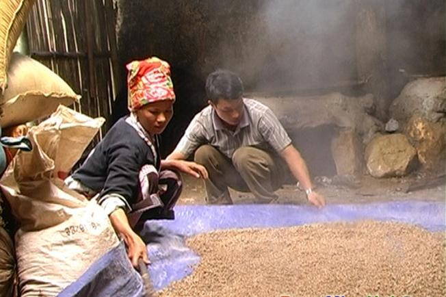 Thóc sau khi nấu được đem trải ra sàn cho nguội