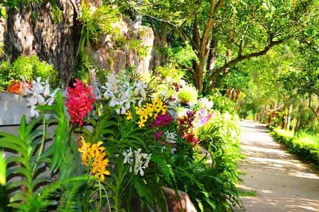 Vườn Hoa Lan được sưu tầm rất nhiều giống hoa lan quý hiếm