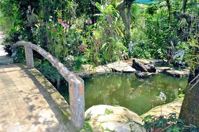 Phong lan rực rỡ sắc màu bao quanh con suối