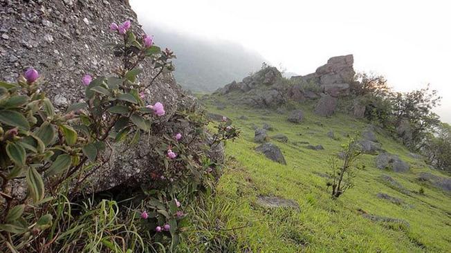 Đầm lầy - nơi cô gái hóa đá