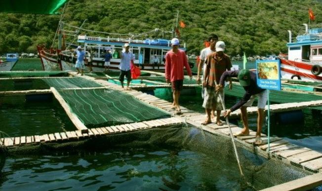 Khu vực lồng bè nuôi hải sản của Công ty Yến Sào Khánh Hòa