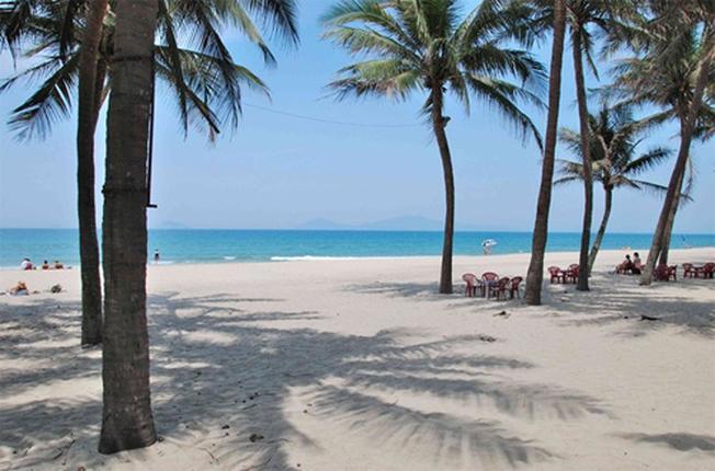 Rặng dừa reo vui cùng sóng biển