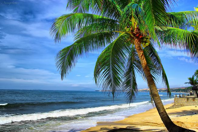 Bai Tru area is located in the north of Hon Tre island