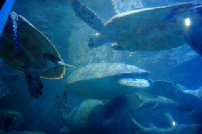 Thế giới của những chú rùa biển, đồi mồi