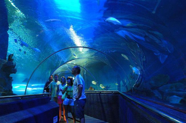 Du khách thích thú ngắm nhìn những sinh vật biển nhiều màu sắc qua bức tường kính