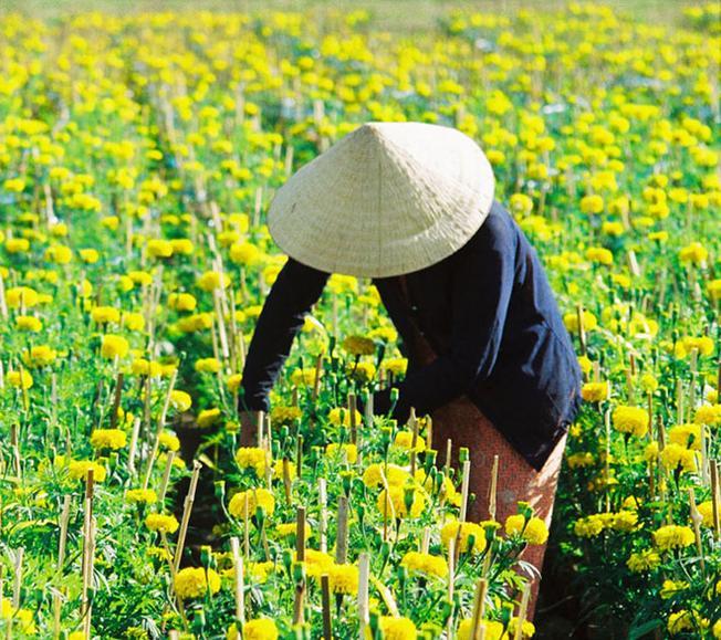 Làng hoa ở vùng ngoại ô