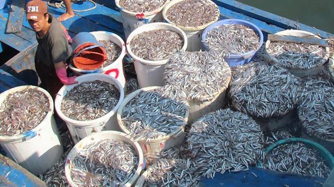 Chợ cá cơm Nha Trang