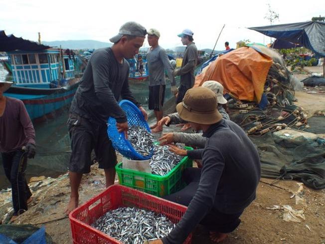 Phân loại cá cơm